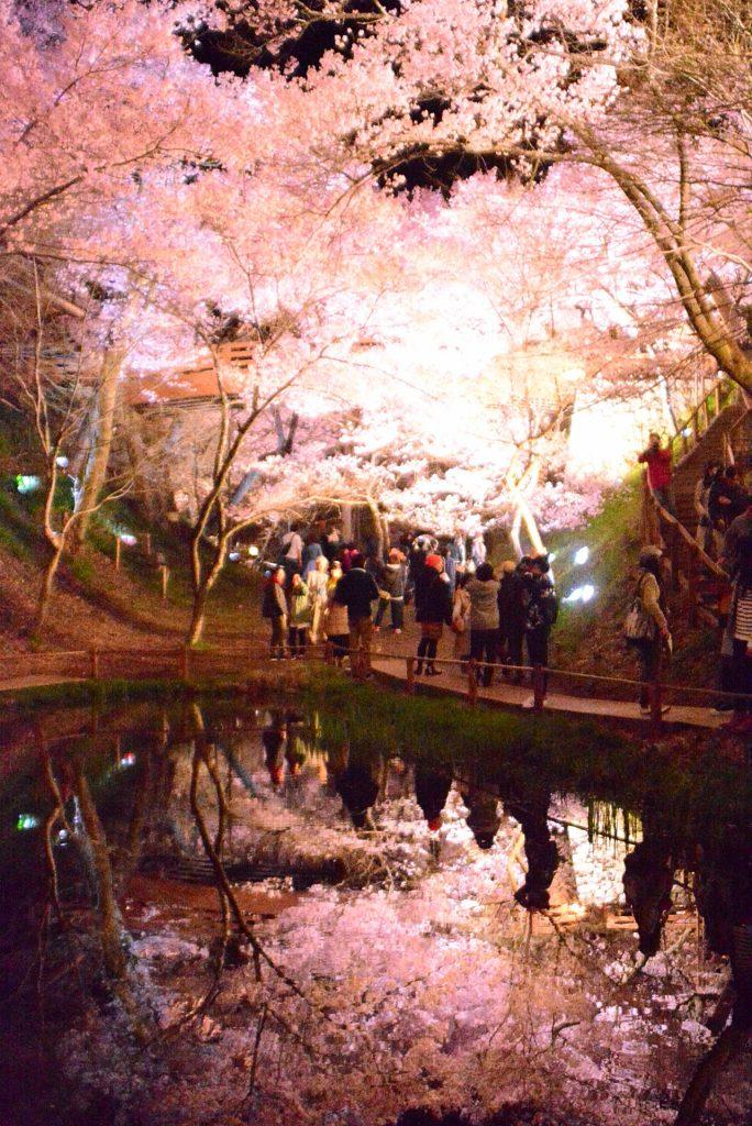 高遠城址公園 さくら祭り(夜桜)